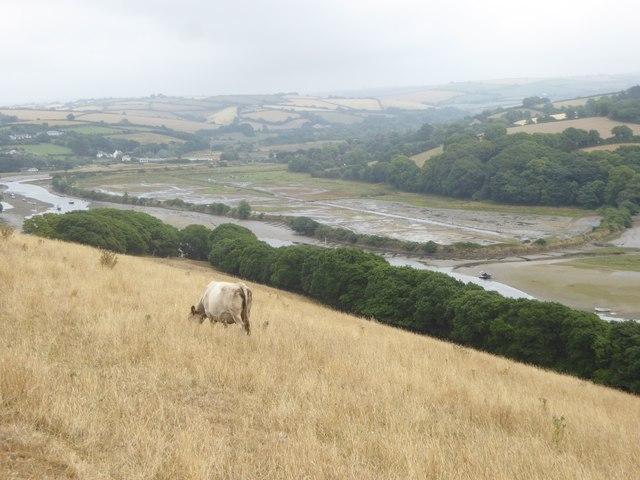South Efford Marsh nature reserve