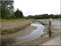 SX6947 : Marsh and creek at North Efford by David Smith