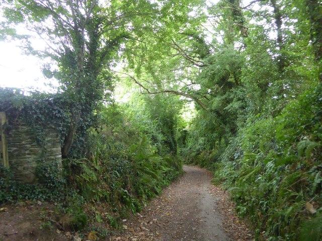 Avon Estuary Walk in South Efford