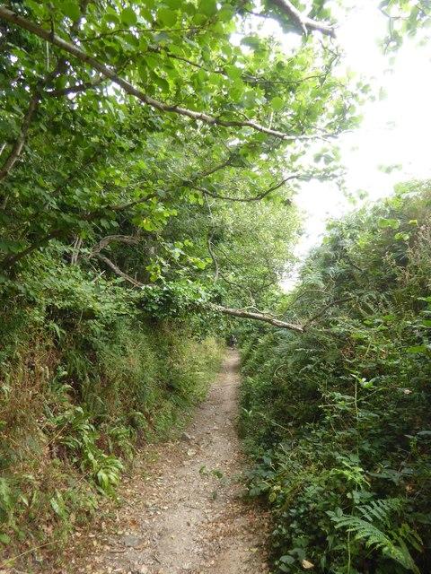Avon Estuary Walk between Stadbury and South Efford