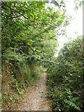 SX6846 : Avon Estuary Walk between Stadbury and South Efford by David Smith
