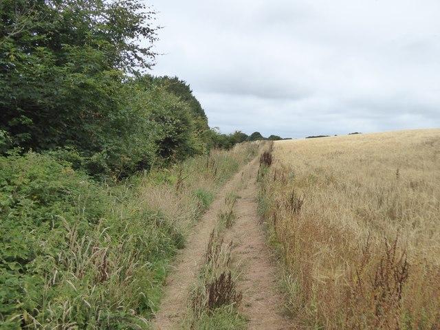 Avon Estuary Walk between wood and field