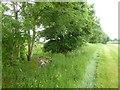 SO7900 : Field boundary east of Hetty Pegler's Tump by David Smith