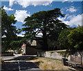 TF0621 : Cedrus libani by Bob Harvey