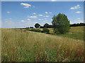 TL2380 : Grassy valley by Poplar Spinney by Hugh Venables
