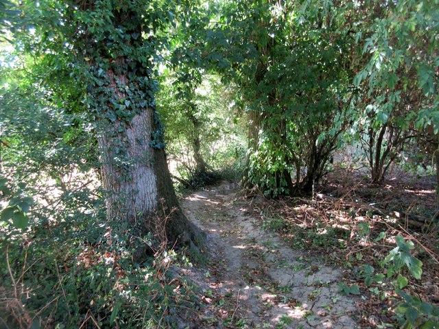 Bridleway between oak trees