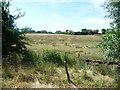 SJ9927 : Sheep field, south of Amerton Railway by Christine Johnstone