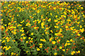 SX8473 : Fleabane, Plants Galore by Derek Harper