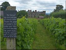 SO4465 : Vineyard, Croft Castle, Herefordshire by Robin Drayton