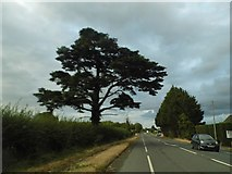 SO7810 : The A38, Parkend by David Howard