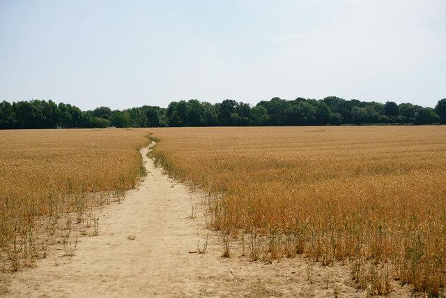 Path Through the Crops