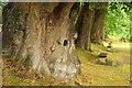 SX7962 : Sweet chestnuts, Dartington by Derek Harper