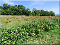 NS0768 : Field by the A886 by Thomas Nugent