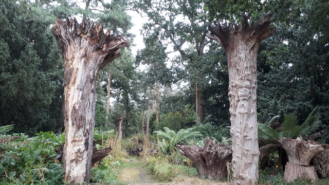 Raveningham Hall - entrance to the stumpery and woodland