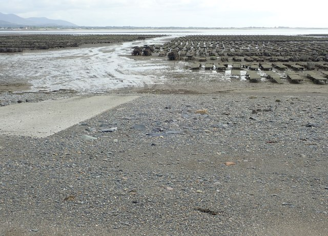 Concrete ramp linking the oyster farm with the depot at Ballytrasna