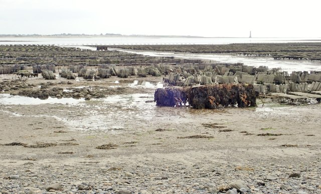 Oyster beds at Cooley Oysters, Ballytrasna