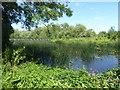 TQ0578 : River Colne alongside Cricketfield Road by Marathon
