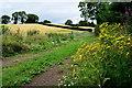 H4767 : Ragwort, Drumconnelly by Kenneth  Allen