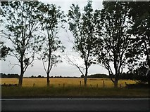 SP2710 : Field by the A40 near Widford by David Howard