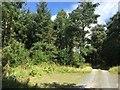 NY5626 : Woodland below Leacet Hill by Richard Webb