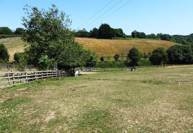 Fields at Salcombe Donkey Sanctuary