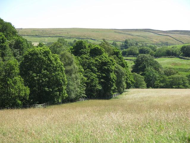 Pastures east of Holmslinn Lead Mine