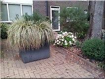 TQ1672 : Planter on Ashburnham Road, Ham by David Howard