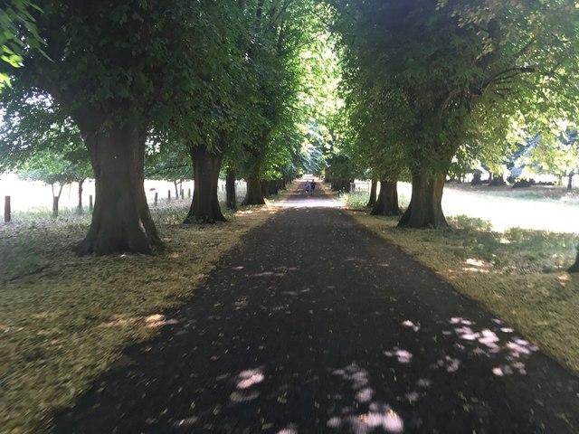 Lime Tree Avenue, Wollaton Park
