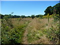 TQ5637 : Public footpath to Ramslye Wood by Christine Johnstone