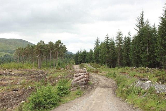 Forest track, Ardverikie Estate