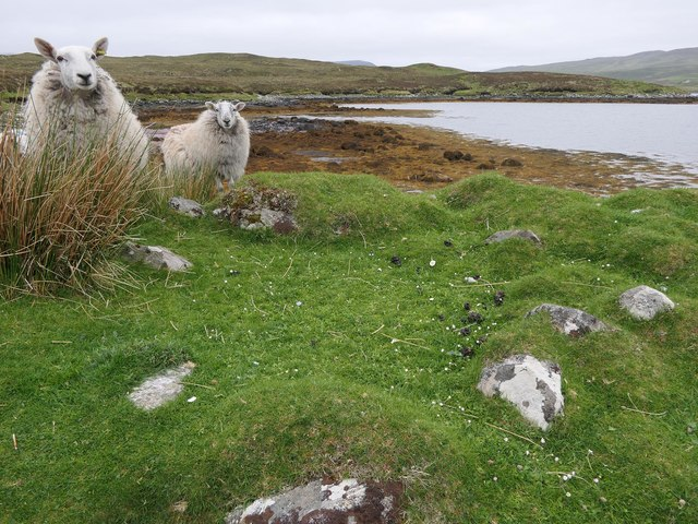 Stone circle (and nosy sheep) by Loch Seaforth/Loch Shiphoirt, Isle of Lewis