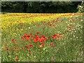 NZ3343 : Poppies in rapeseed field, Littletown by David Robinson