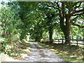 SJ7875 : Tree-lined track to Ivy House Farm by Christine Johnstone