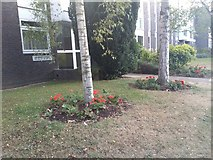 TQ1672 : Gardens on Ashburnham Road, Ham by David Howard
