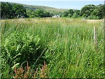 NS0571 : Shalunt Farm by Thomas Nugent