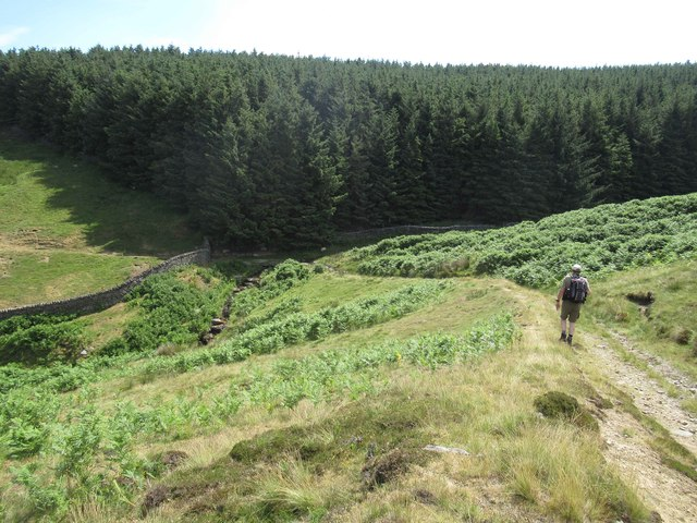 Bridleway leading to Fine Burn and Allotment Plantation