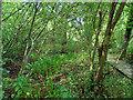 TQ8038 : Wetlands - Sissinghurst Castle Gardens by Paul Gillett