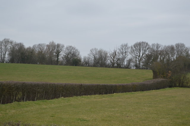 Hedgeline