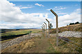 NZ0643 : Fence along plantation on Drypry Hill by Trevor Littlewood