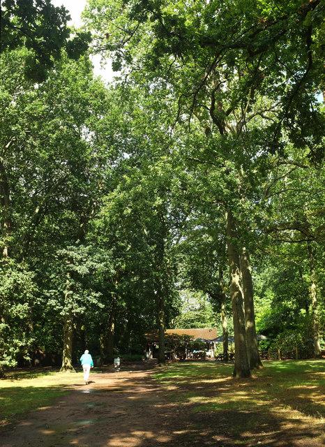 Path to the tea room, Winkworth Arboretum