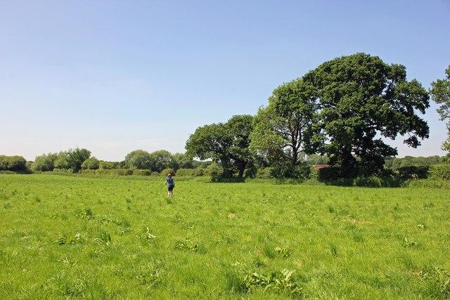 A field near Aldford
