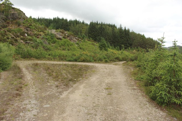 Forest track, Black Wood