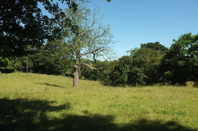 Field, Little Studley