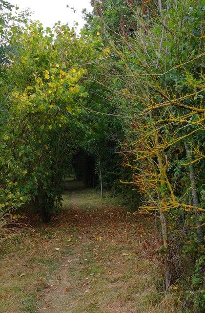 Footpath in Shillbrook Wood near Bampton, Oxon