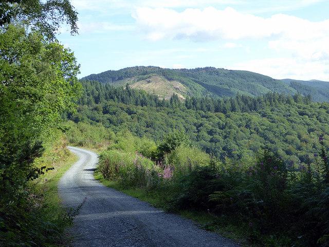 Forest road skirting Pant-perthog Farm