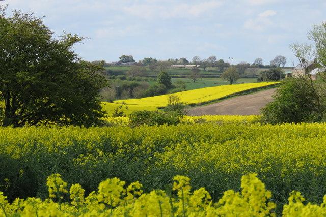 Farmland, Tursdale