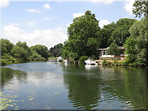 TQ0866 : The River Thames on the north side of Desborough Island by Mike Quinn