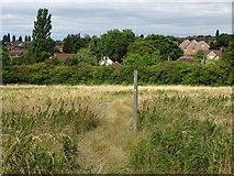 SK3837 : Footpath to Morley Road by Ian Calderwood