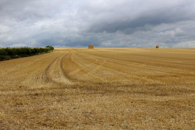Field beside Wighill Lane