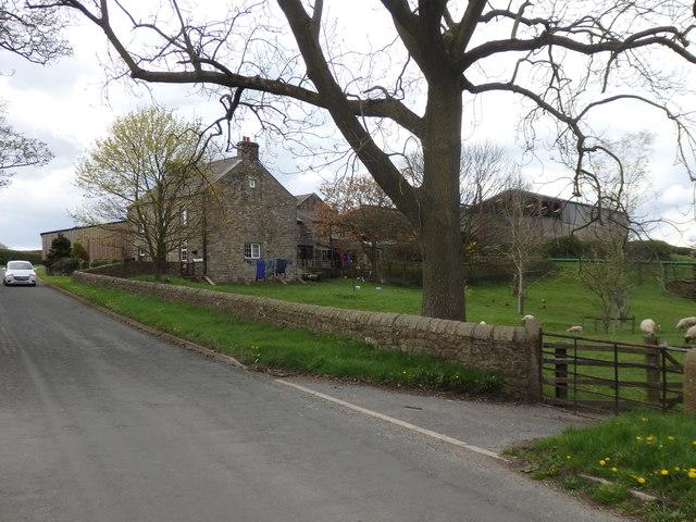 Stirzaker's Farm, Bay Horse